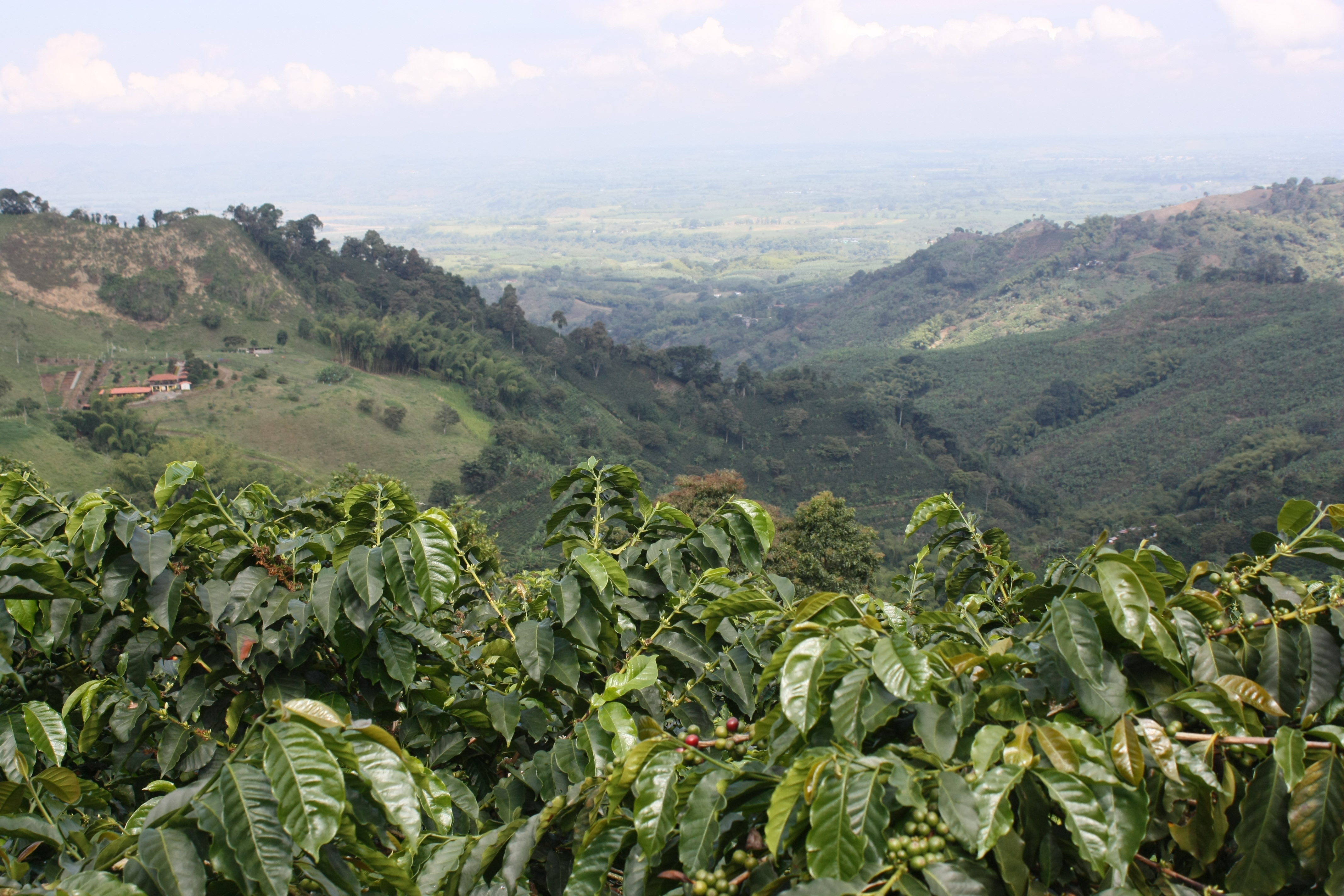 Colombia Coffee Region Colombia Coffee Region