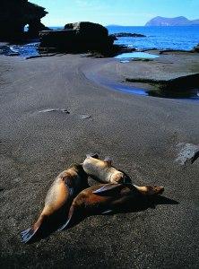 sea_lions_puerto_egas