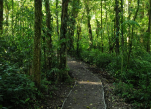 Monterverde Cloudforest