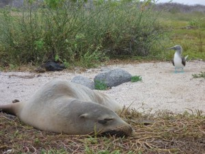 A seal on the Galapagos Islands