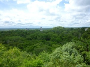 View from atop one of the Tikal temples